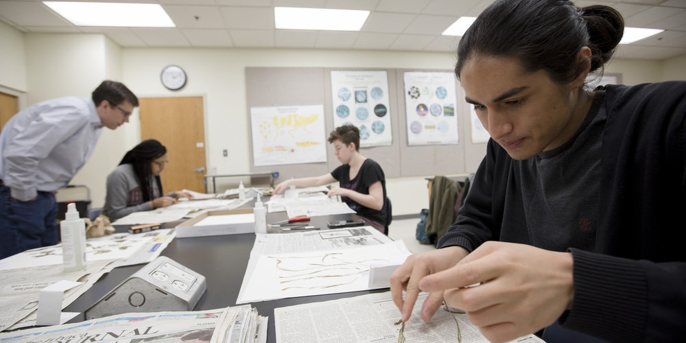 Rian Szende '20, Imani Badillo, '22, and Renee Geyer '21 work with Professor of Biology Michael Moore to preserve plant specimens for the college's herbarium.