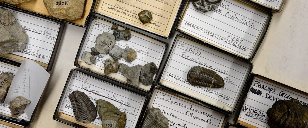 Trays of fossils.